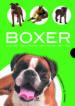 BOXER: HISTORIA, HIGIENE, ALIMENTACION, EDUCACION, SALUD JAVIER VILLAHIZAN