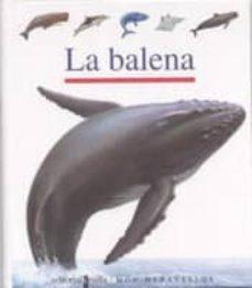 Asdmolveno.it La Balena Image