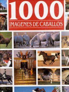 Javiercoterillo.es 1000 Imagenes De Caballos Image